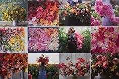 the Floret Calendar