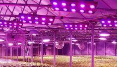Demands of LED grow light is beginning to show rapid growthhttp://www.eneltec-led.com/LED-Lighting-Blog/led-grow-light-is-a-new-breakthrough-in-led-lighting-business/