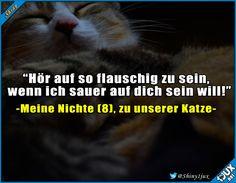Man muss nur flauschig sein. :) #Katze #Katzen #Haustier #Haustiere #Frauen #Memes