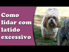 Latido excessivo - Como lidar com cães que latem demais - YouTube