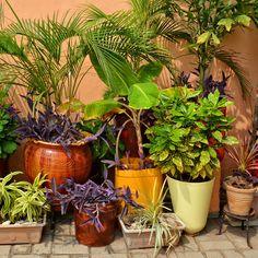 Tropische planten in huis? Deze moet je hebben!