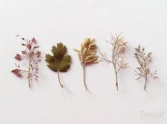 botanical <3