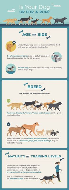 Useful Dog Care And Training Tips - Explore tips and advice for every aspect of your dog's care. Learn how to take care your dog and train your dog. Dog Care Tips, Pet Care, Fitness Workouts, Easiest Dogs To Train, Dog Items, Dog Runs, Dog Training Tips, Agility Training, Training Classes