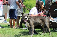 Adopt a bully-Jake smiling for the camera