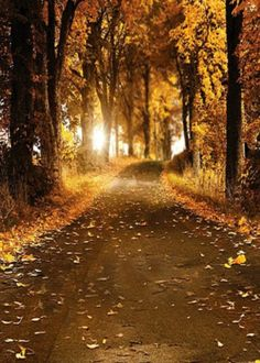 Fall Autumn Woods Photography Studio Backdrop