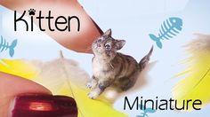 HEY GUYS !! Miniature Cat Tutorial // Realistic Kitten Dollhouse DIY // SugarCharmShop