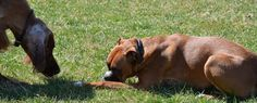 schmoo and stuff - Beth Courter - Picasa Web Albums