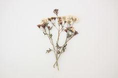 rejouir:  Belle Fleur de Lis