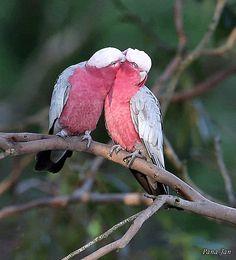 Cute Birds, Pretty Birds, Beautiful Birds, Animals Beautiful, Bird Pictures, Nature Pictures, Cute Funny Animals, Cute Cats, Vogel Gif