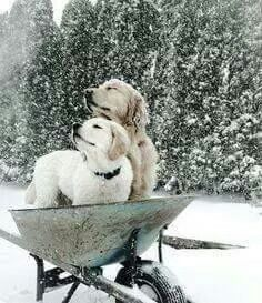 golden retriever pup enjoys the snow Cute Puppies, Cute Dogs, Dogs And Puppies, Doggies, Animals And Pets, Baby Animals, Cute Animals, Nature Animals, Animals In Snow