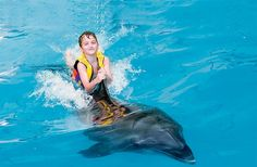 The Dolphin Experience on Dhow Dinner Tours in Dubai City By Diane Trader  Aquaventure's Dolphin Bay at Atlantis, The Palm is no question among the most effective places to get up close and pleasant with dolphins, with its 'shallow water communications'.