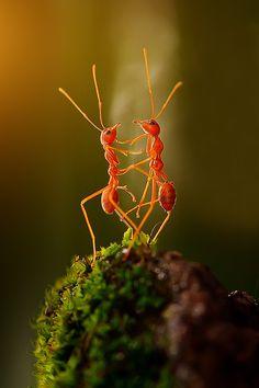~~the dancing ants by Rhonny Dayusasono~~