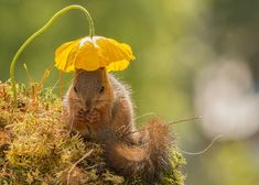 nature-animal-photography-backyard-squirrels-geert-weggen-2
