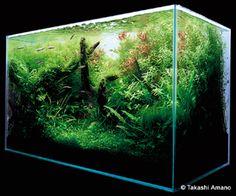 Cesta do hotového akvária Takashi Amano