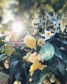 82 отметок «Нравится», 2 комментариев — Sveta Narinskaya (@svetanarinskaya) в Instagram: «Сфотано на телефон🌸🌼 #love #sun #flowers»