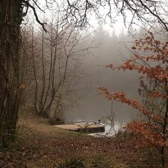 Forest Of Dean, Over The Garden Wall, Autumn Aesthetic, Lake Forest, Foto Art, Best Seasons, We Fall In Love, Belle Photo, Aesthetic Pictures