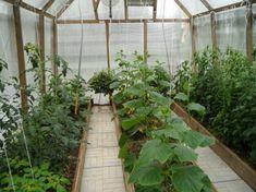 Top 3 îngrășăminte pentru roșii și castraveți! Gospodinele să le noteze neapărat! - Retete Usoare Garden Boxes, Farm Gardens, Gardening Tips, New Homes, Farmhouse, Layout, Greenhouses, Window, Ideas