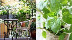 Växter att odla på balkongen   ELLE Decoration
