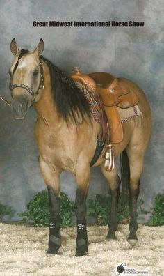 Quarter Horse stallion Dun It Vegas Style