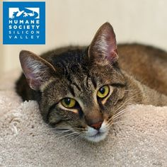 Indy is one adventurous tripod kitty!  Come meet him and see for yourself!