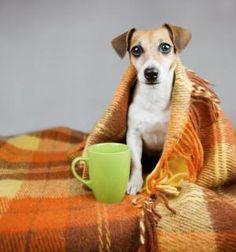 Você poderia pensar que o seu cachorro não tem frio, mas pode não ser assim! Confira essas dicas que te vão ajudar. #animais #cachorro