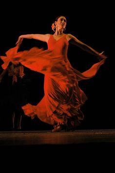 Il flamenco by Francesco