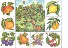 Teaching Plants, Teaching Kids, Kids Learning, Infant Activities, Preschool Activities, Fruit Flowers, Kids Wall Decals, Kindergarten Worksheets, Science And Nature