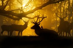 Stag and Friend by Max Ellis on 500px
