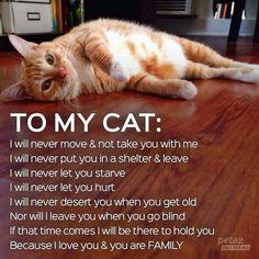 Promises To My Cat