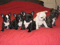 A home should contain a plethora of puppies, preferably matching in breed, color, and/or marking so as to effect the best 101 Dalmations vibe.