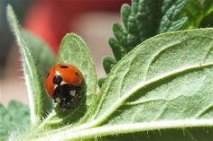 Lady Bug by Blue-BirdPhotography.deviantart.com on @deviantART