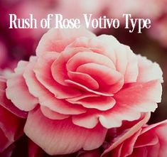 Rush of Rose Votivo Fragrance Oil Type | Just Scent Candle and Soap Supplies