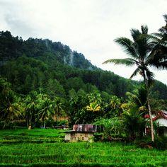 Hijaunya Indonesia