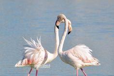 #sanvalentino #sanvalentinoinpuglia #salento #neverendingsummer #pinkflamingo #love is the answer #fotobycosimotrono #weekend #masseriadolcevita #masseriatorrecoccaro