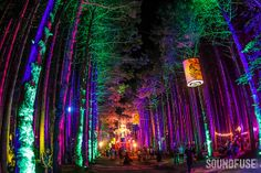 2013 Electric Forest Festival by Soundfuse Online Magazine, via… Forest Festival, Rave Festival, Festival Party, Festival Lights, Music Festival Outfits, Music Festivals, Concerts, Beetlejuice Halloween, Nanbaka Anime