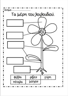 Albert Einstein Wore Glasses Coloring Pages Math Fair