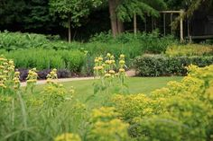 Garden Design in London by The Garden Builders, landscape design Modern Garden Design, Landscape Design, Small City Garden, Seasons Of The Year, Surrey, Hampshire, Beautiful Gardens, Planting, Garden Ideas