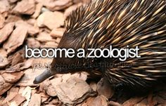 or wildlife biologist!!!