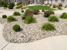 A cheerful, low maintenance garden filled with blooming shrubs.