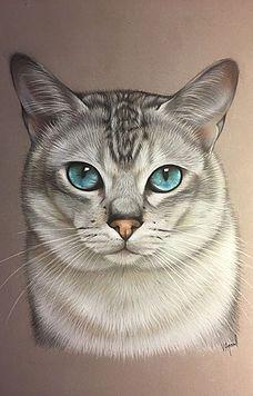 Animal Sketches, Animal Drawings, Chat Somali, Black Cat Painting, Cat Anatomy, Frida Art, Cute Cats Photos, Cat Sketch, Small Canvas Art
