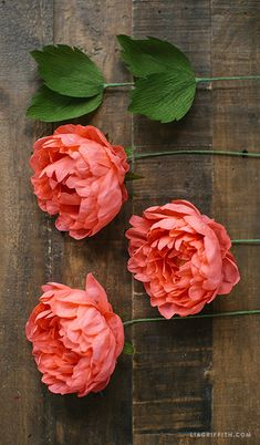 Crepe Paper Sarah Peonies … - Diy for Home Decor Made by hand in Germany by Werola Natural dyes and colors High quality, extra fine crepe paper Floral Tape Lia Griffith - Craft With Us Lia Griffith - Gorgeous DIY Projects, Because Everyone Can Be Creati Faux Flowers, Diy Flowers, Fabric Flowers, Diy Paper, Paper Crafts, Paper Peonies, Tissue Paper Flowers, Paper Flowers Wedding, Paper Flower Tutorial