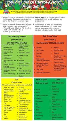 Parakeet Food, Parakeet Care, Budgie Parakeet, Budgies, Parrots, Parrot Chop, Parrot Pet, Parrot Toys, Conure Bird