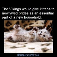 """prokopetz: """" ultrafacts: """" bryarly: """" foxfairy5: """" ultrafacts: """" Source More Facts """" Yes this could have to do with the fact that Freya the Norse Goddess of love, beauty and fertility drove a chariot..."""