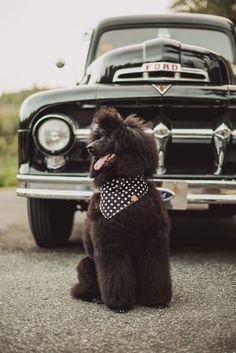 Fotografias Retro, Perros con estilo Vintage. Dogs, Animals, Retro Photography, Vintage Style, Fotografia, Animales, Animaux, Pet Dogs, Doggies