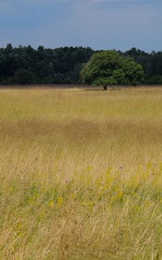 Kiskunság - a Peszéradacsi rétek nyáron. Erdős, ligetes sztyep Európa közepén. #puszta #steppe #landscape #nature #photography #Turan #tree #természet #Kiskunság #Alföld Land Scape, Nature Photography, Country Roads, Nature Pictures, Wildlife Photography