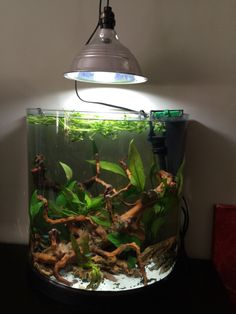 Some plants take a dormant period. You may also opt to continue to keep your desk plants raised above your true desk. In a closed system like an aquarium, plants will expand only in addition to the… Nano Aquarium, Nature Aquarium, Planted Aquarium, Aquarium Fish, Aquarium Ideas, Aquarium Design, Aquascaping, Best Aquarium Filter, Fish Tank Terrarium