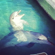 ♥ (Sea World, Gold Coast, Australia)
