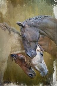 Horses in different shades of brown.