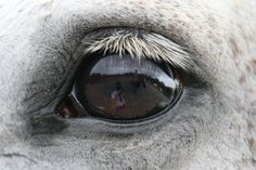 My son Eric took this pic of his pony Secret using my Canon 40D and 70-200 'L' lens