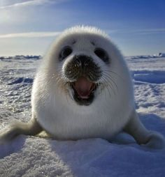 25 Seal Pups That Will Make You Want To Rip Your Hair Out With Cuteness